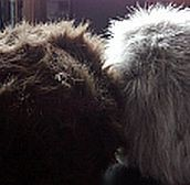 Name That Tribble! (a contest with a difference)